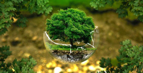 O poder do setor de TI em reduzir o impacto ambiental